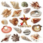 picture of cockle shell  - Seashell collection isolated on white background - JPG