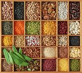 picture of pinto bean  - Peas - JPG