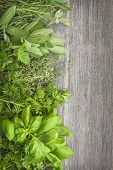 stock photo of salvia  - Fresh herbs over grey wooden background - JPG