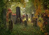 pic of headstones  - Old jewish cemetery in Vienna - JPG