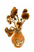stock photo of yesteryear  - ancient aged clay jug with old dry yesteryear sunflower heads - JPG