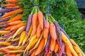 picture of root vegetables  - Colorful market display or organic rainbow carrots - JPG