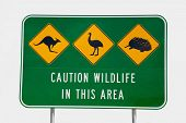stock photo of kangaroo  - An Australian Wildlife Sign depicting a kangaroo - JPG