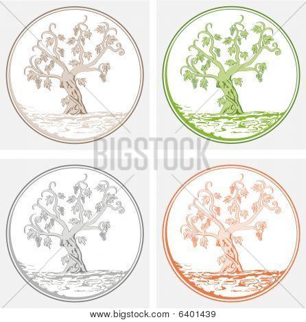 vine tree