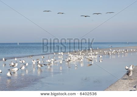 Patrolling pelicans