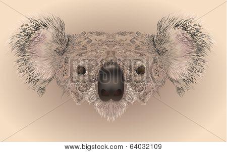 Realistic Illustration Of Koala Bear