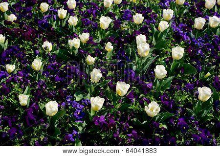 Some ornamental spring flowers.