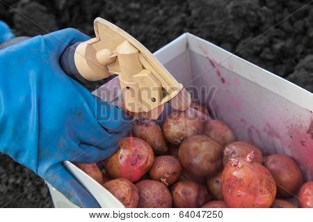 Handling Potato Insecticides