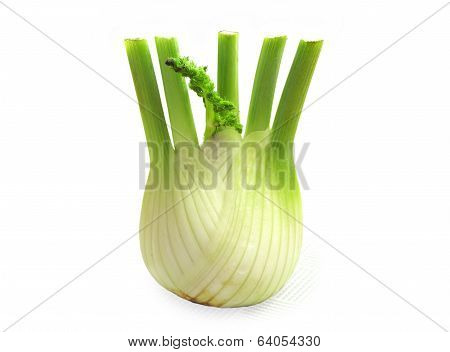 Food  Ingredient Fennel
