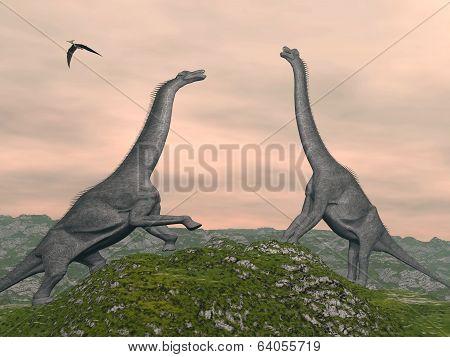 Brachiosaurus dinosaurs fight - 3D render
