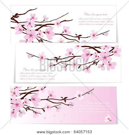 Three banners with Sakura flowers