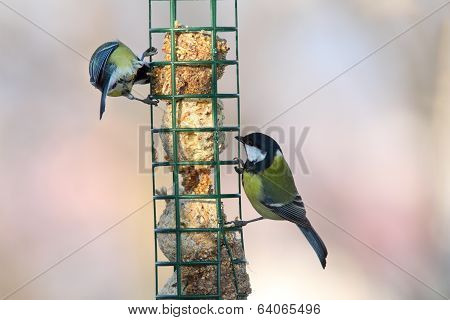 Two Different Species On Bird Feeder