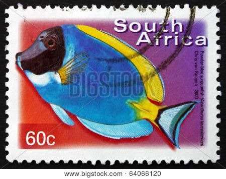 Postage Stamp South Africa 2000 Powder-blue Surgeonfish, Marine