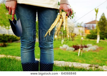 Midsection of woman holding bunch of freshly harvested vegetables and a hoe in garden