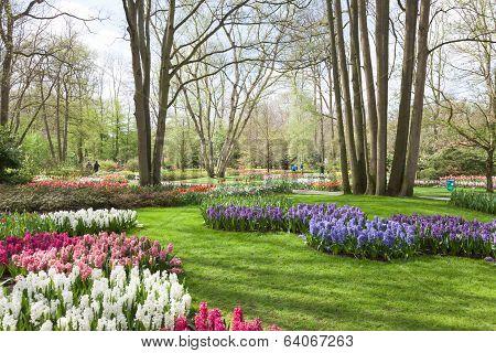 Keukenhof Tulip Garden Netherlands