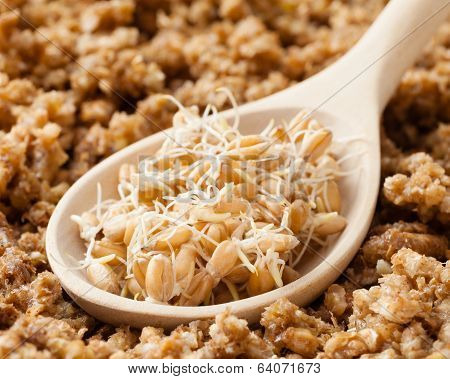 Wooden Spoon With Wheat Sprouts And Ground Sprouted Grains