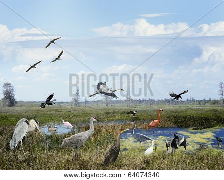 Florida Wetlands Collage With Birds And Animals