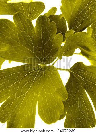 flower sheet