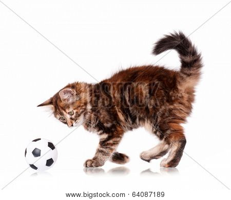 Cute kitten playing soccer ball, isolated on white background