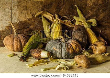 Still Life With Pumpkin, Corn, Taro, Yam.