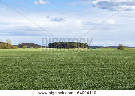 Landscape In Usedom