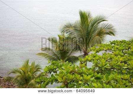 Palm trees on the background of the sea on the island of Sentosa in Singapore.