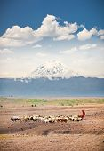 stock photo of kilimanjaro  - Masai herders  herd  in savannah with a snow covered Mount Kilimanjaro in the background - JPG