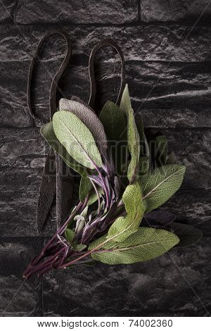 Sage Leaves. Culinary Aromatic Herbs.