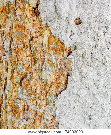 Termite Nest On Bark