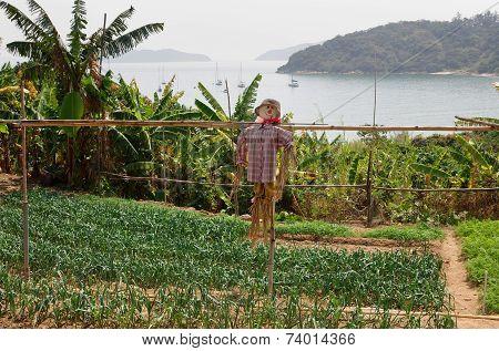 Vegetable Garden With A Scarecrow