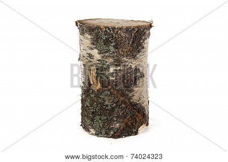 Photo of birch stump
