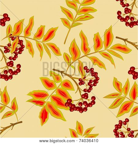 Seamless Texture Rowanberry Vector