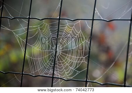 Cobweb On Chain Link Fence