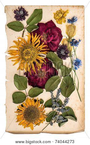 Dried Flowers Over Aged Paper. Herbarium Lavender, Roses, Sunflowers, Cornflower