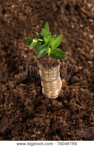 Stack Of Coins And Sapling