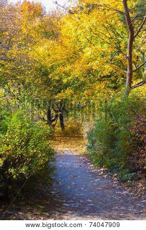 Lots Of Autumn