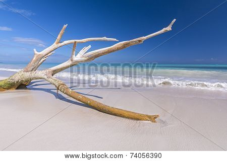 Drift Wood On Tropical Beach