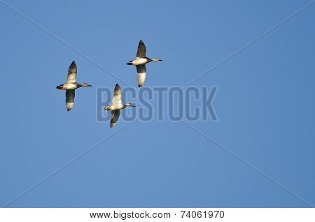 Three American Wigeons Flying In A Blue Sky