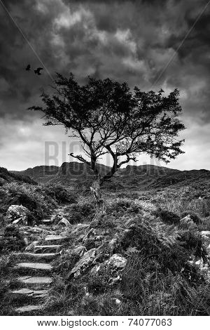 Solitary Tree On Mountain And Footpath Landscape In Monochrome