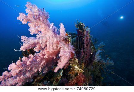 deep wreck scuba diving wreck