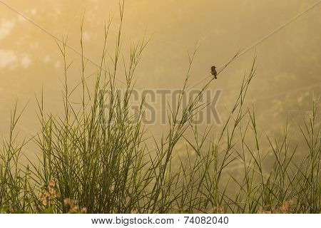 Little Bird Single Watching Something , Hold On The Branch Sunlight Cried In The Morning