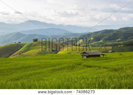 Northen rice field