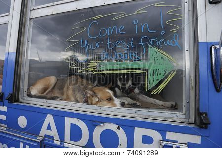Huskies show the way in rescue van