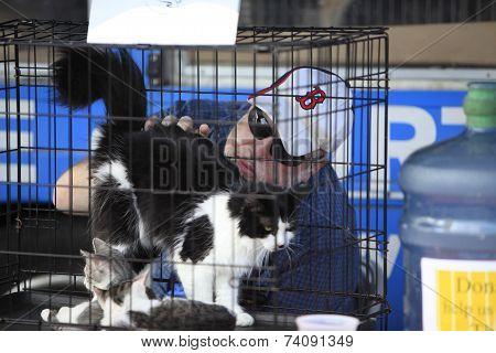 Volunteer with kitties in crate