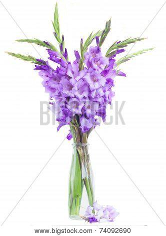 Bunch Of Gladiolus Flowers
