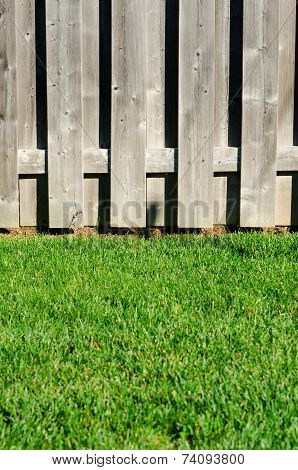 Yard fence and grass
