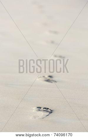 Footprints On Beach, Mahe, Seychelles