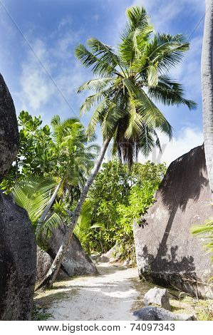 Boulders And Palm Trees, La Digue, Seychelles