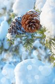 stock photo of cone  - Snow - JPG