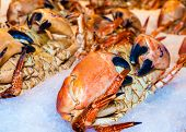 picture of cooked crab  - Closeup view on fresh crabs in the market seafood background - JPG